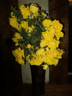 Yellow roses from BoulderCrest Ranch