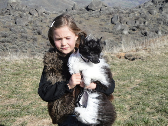 Tori age 10 with Clea 9 months ~ Legacy  Powderpuffs at BoulderCrest Ranch