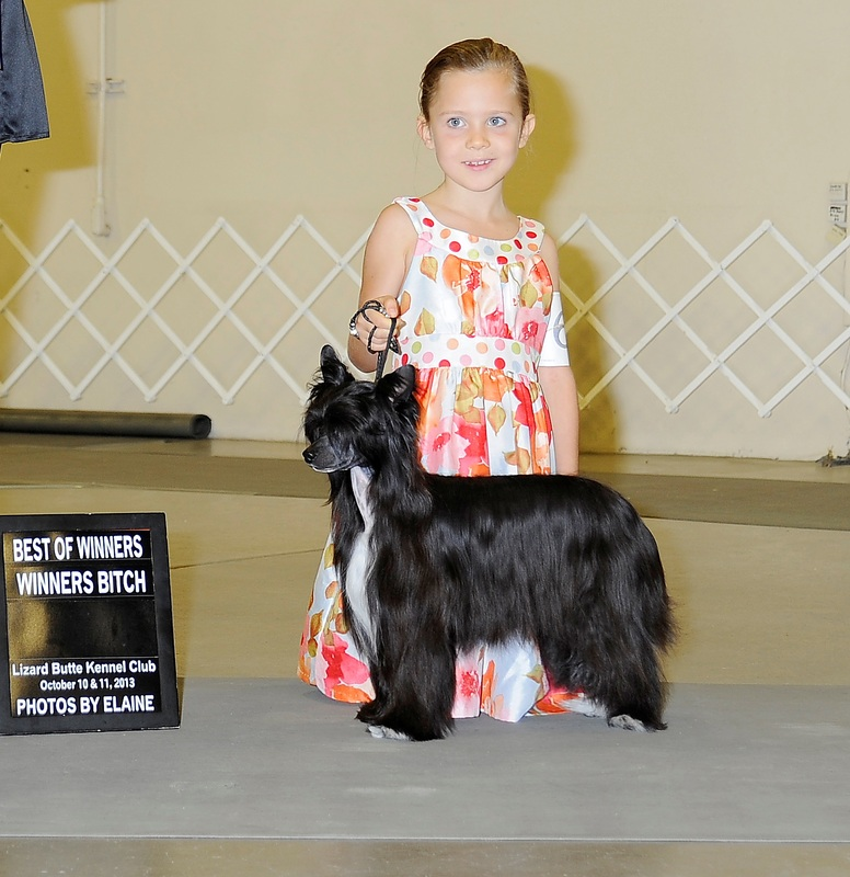 Ch Lola is a Showgirl at BoulderCrest ~ Lola Best of Winners ~  Legacy Powderpuffs at BoulderCrest Ranch